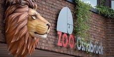 Löwe attackiert Tierpflegerin im Zoo