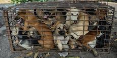 Na, Mahlzeit! 61 Hunde vor Schlachtung gerettet