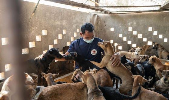Na, immerhin größer als der Kleinbus. In einem provisorischen Gehege werden die Hunde zunächst einmal erstversorgt.