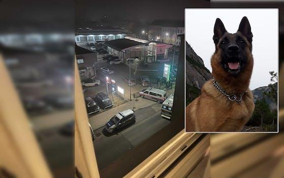 Der Hund konnte den Tatverdächtigen stellen.