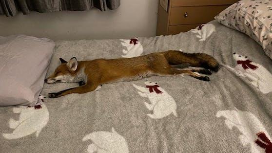"""""""Woody"""" wurde von Wildlife-Spezialisten Geoff Grewcock blind am Straßenrand gefunden."""