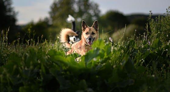 Auch der besterzogenste Hund kann manchmal ausbüxen. Ruhe bewahren!