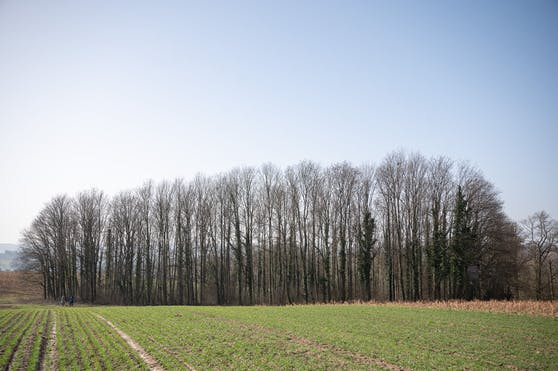 Sinsheim-Eschelbach - hier in dieses Waldstück wurde der 13-Jährige gelockt.