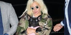 Hunde-Sitter angeschossen: Gaga bietet halbe Million