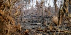 Teile des Regenwalds illegal über Facebook verkauft