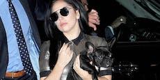 Nach Überfall: Lady Gagas Hunde sind wieder da