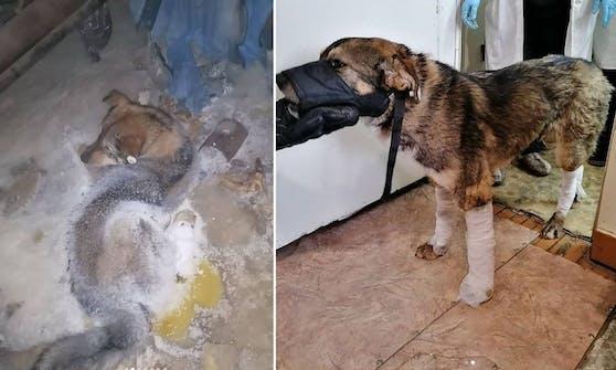 Der arme Straßenhund heulte herzzerreißend um Hilfe, als er am Boden festfrohr und nur noch den Kopf bewegen konnte.