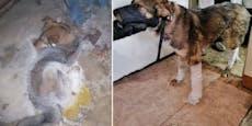Hund friert bei -50 Grad Celsius am Boden fest