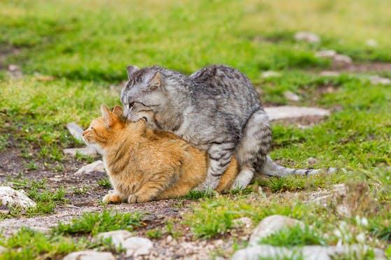 Das Liebesspiel der Katzen ist gar nicht so uninteressant.
