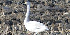 Erwischt! Seltene Vogelarten in NÖ fotografiert