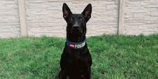 Polizeihund überführt alkoholisierten Einbrecher