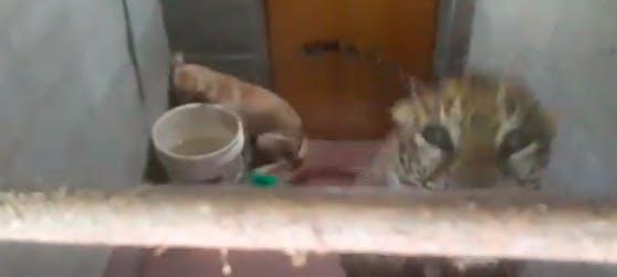 """Eine Nacht und einen halben Tag verbrachte Hund """"Bollu"""" mit einem Leoparden auf einer Toilette."""
