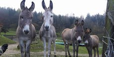 Tierisch! Tiergärten dürfen wieder öffnen