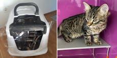 Katze in zugeklebter Katzentoilette an Donau entsorgt