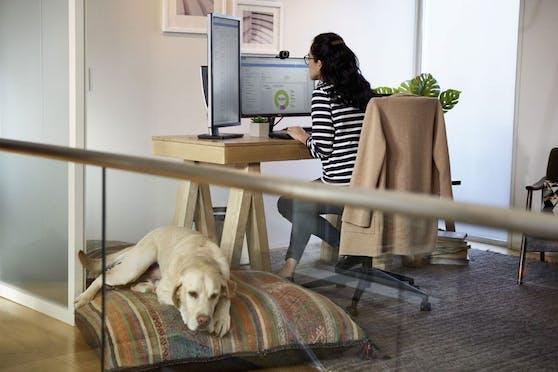 Microsoft stellt neue Employee Experience Platform Microsoft Viva vor.