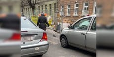 Tierliebe Wienerin rettet verletzte Taube von Straße