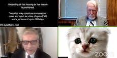 Zoom-Chat mit Katzenfilter – Netz lacht über Anwalt