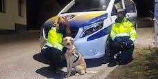 Rettungshund fand Vermissten nach großer Suche