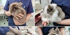 Schon wieder Kaninchen in Wien ausgesetzt!