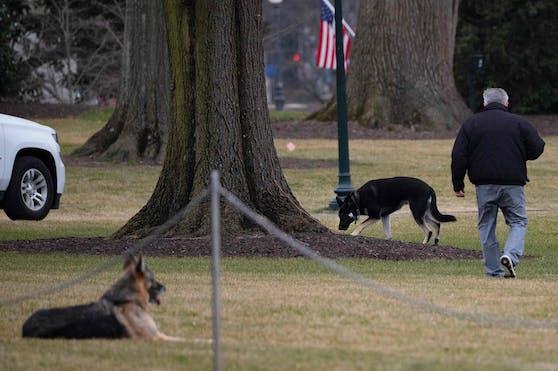 """First Dogs """"Major"""" und """"Champ"""" mussten wieder aus dem Weißen Haus ausziehen."""
