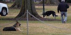 """""""First Dogs"""" mussten aus dem Weißen Haus ausziehen"""
