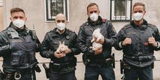 "Polizisten setzen bei ""Hasenjagd"" auf skurrile ""Waffe"""