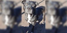 Hund in Wien-Favoriten entführt und misshandelt