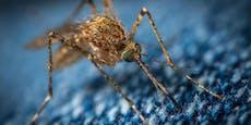 Laser aus Mini-Computer schießt Stechmücken ab