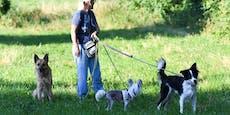 CO2-Steuer für Hundehalter?! Hunde sind Klimasünder