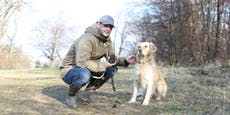 Tierhasser vergiftete Hunde in Wien-Hietzing