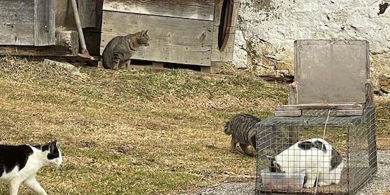 """Der """"Tierschutz aktiv Kärnten"""" kümmert sich um Streunerkatzen - dabei stießen die Tierschützer auf einen besonders brutalen Fall von Tierquälerei."""