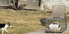Kärntnerin verfütterte Katzenbabys an ihren Hund