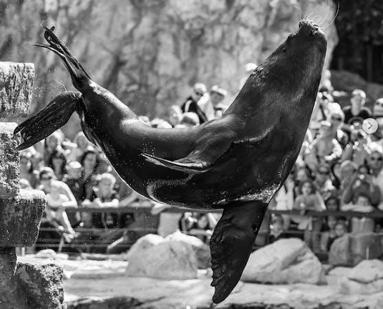 Am Mittwoch veröffentlichte der Tiergarten Schönbrunn einen berührenden Nachruf.