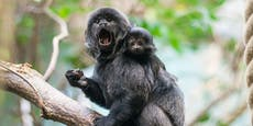 Mysteriöses Affensterben im Zoo Duisburg