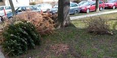 Christbäume liegen auch im März noch im Gemeindebau-Hof
