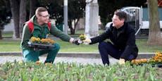 838.000 Blumen lassen nun die Stadt erblühen
