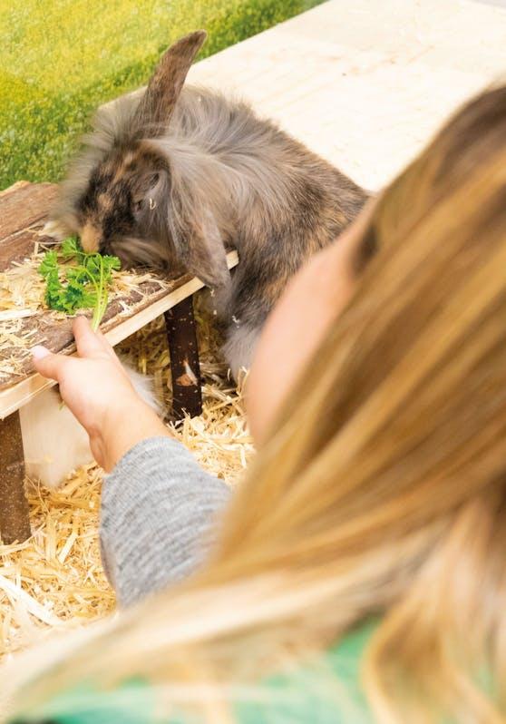 Zweite Chance für Heimtiere in der Adoptierstube