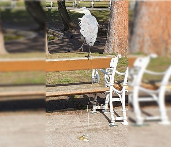 Ein Graureiher saß in Wien auf einer Parkbank.