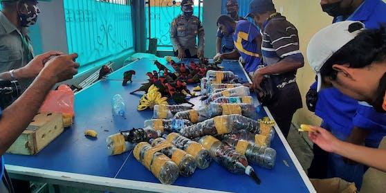 Papageien in Plastikflaschen geschmuggelt