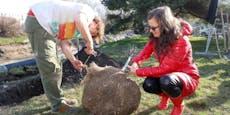 20 klimafitte Weiden für renaturierten Liesingbach