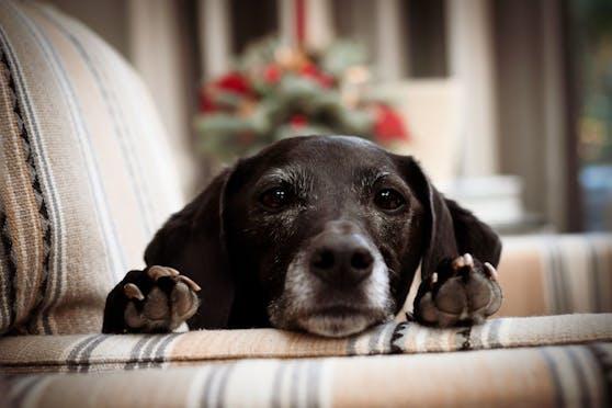 Seit sechs Jahren kümmert sich das TierQuartier um herrenlose Tiere. Bisher konnten 9.300 Tiere an ein neues Zuhause vermittelt sowie 3.200 Fundtiere wieder an ihre Besitzer übergeben werden.