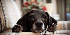 TierQuartier Wien fand für 9.300 Tiere neues Zuhause