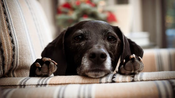 Können Hunde wirklich Lügen riechen?