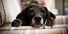 Ist ein Hund ein Lügendetektor?
