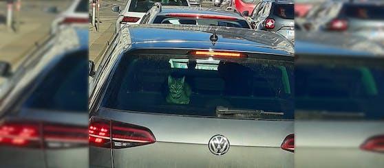 Ob die Katze ein blinder Passagier ist, ist nicht ganz klar.