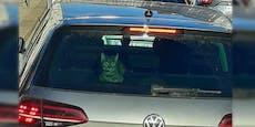 Blinder Passagier? Katze fährt in Kofferraum von VW mit