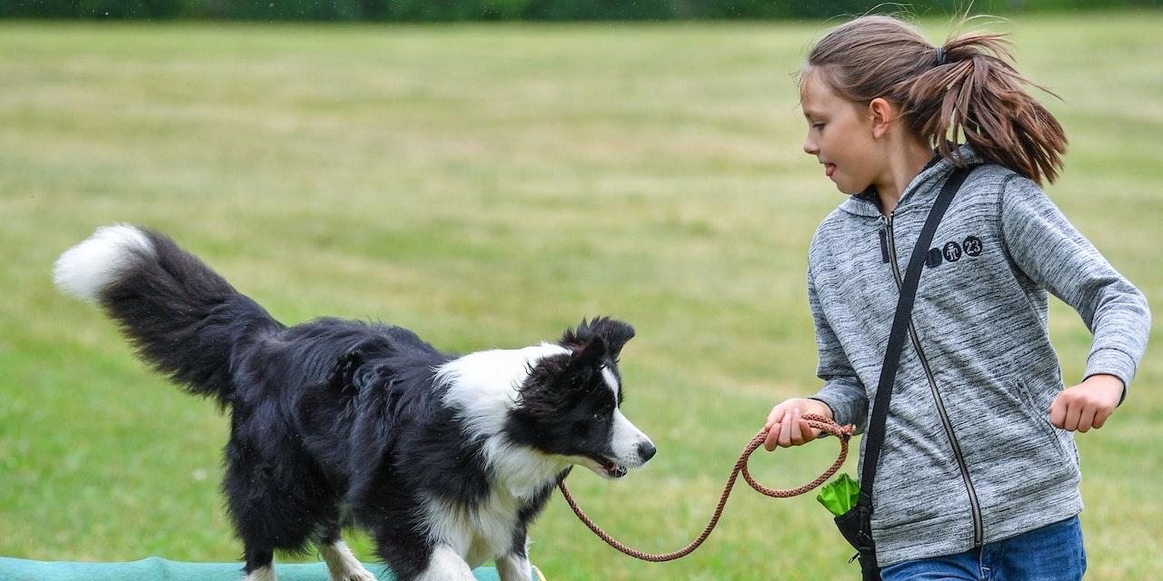 Hunde dürfen dank neuer Verordnung wieder in die Schule
