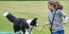 Hundeschule markiert Geimpfte und Getestete mit Bändern
