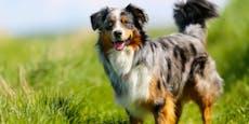 Trauma für Hund nach Ausbildung, Frau klagt auf 18.560€