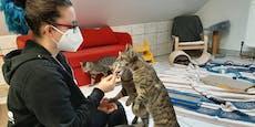 Corona bringt Tierheim Bruck/Leitha an seine Grenzen